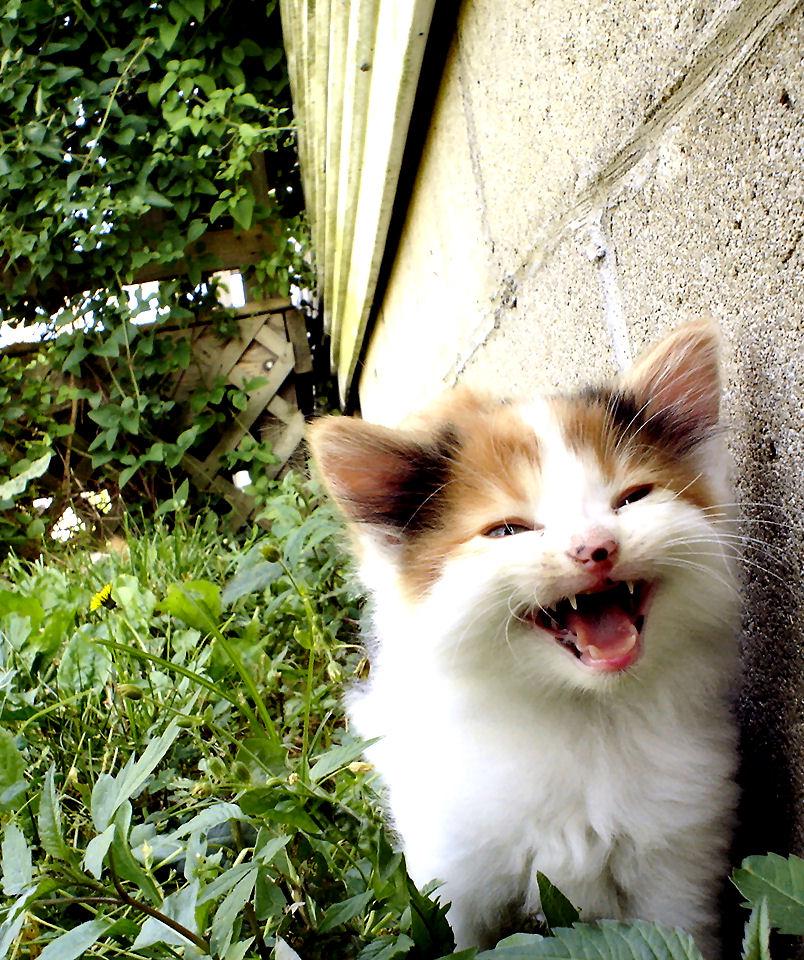 Kittenfluff