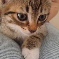 Kitty44